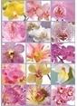 Educa Educa 1500 Parça Puzzle Collage Of Flowers Renkli